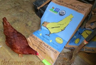 Feeding Your Flock Organic Chicken Feed