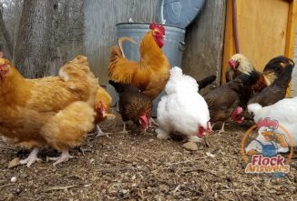 How to Avoid Chicken Feed Storage Mistakes