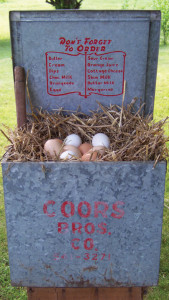 Nest Boxes For Chickens