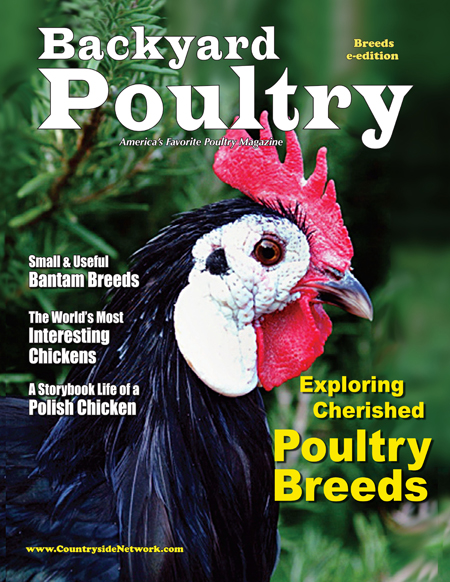 Backyard Poultry Poultry Breeds e-edition