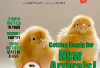 Backyard Poultry Chicks e-edition