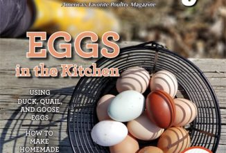Backyard Poultry Egg Recipes e-edition