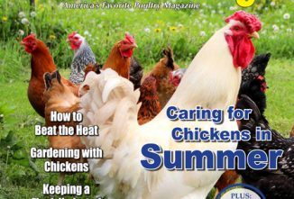 Backyard Poultry Caring for Chickens in Summer e-edition