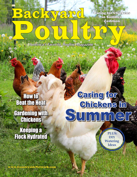 Backyard Poultry Caring for Chickens in Summer e-edition ...