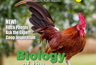 Backyard Poultry Biology of the Chicken e-edition