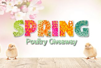 Score up to $2200 in Prizes During the Spring Poultry Sweepstakes!