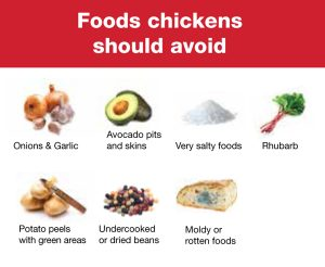 Foods Chickens Should Avoid
