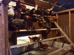chicken-coop-design