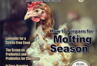 Backyard Poultry Prepare for Molting Season e-edition