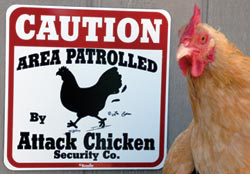 This hilarious sign was posted shortly after Byron's dog was chased around the backyard by one of his chickens.