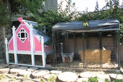 After Samir finished building the coop, he added a side run complete with perches and dirt baths.