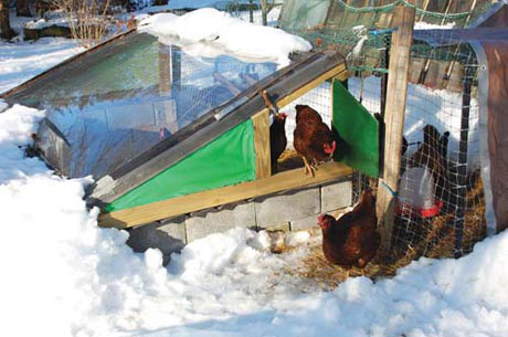 "The Fishwick's free ""Chicken Solarium"" offers a warm sunny hangout for the chickens in the cold of winter."