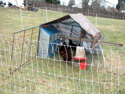 This simple pen was made from six sheep panels and a tarp, yet chickens winter very well under its protection.