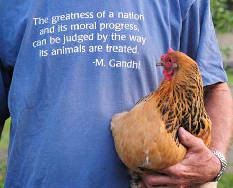 """This hen named Sarah, fits in well as a mascot for the """"Sara""""-sota Cluck Chicken Group."""