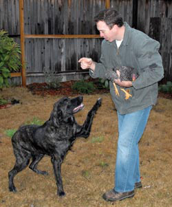After Byron promised his dog Farley unlimited eggs to snack on, Farley raised his paw and swore not to hurt the chickens. Byron does not recommend leaving chickens and dogs unsupervised but he does enjoy watching the playful interaction between the two while closely monitored.