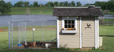 With a bit of paint, new windows and lots of elbow grease, the coop is a lovely home for the Fouts' birds.
