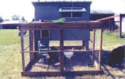 Nesting boxes are conveniently located outside the coop for easy egg collection.