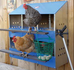 Don't let a slick nest box salesman sell you more than you actually need. This six-hole nest box will easily accommodate up to 24 hens.