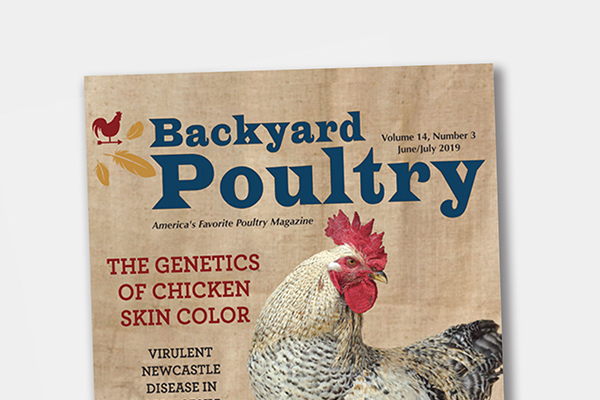 Backyard Poultry Print Subscription (6 Issues)