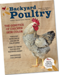 Backyard Poultry Print Subscription (18 Issues)