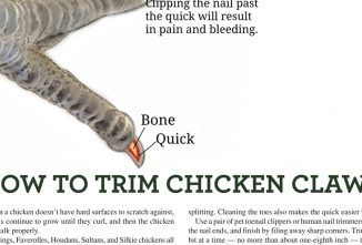 How to Trim Chicken Claws