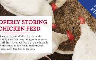 Properly Storing Chicken Feed