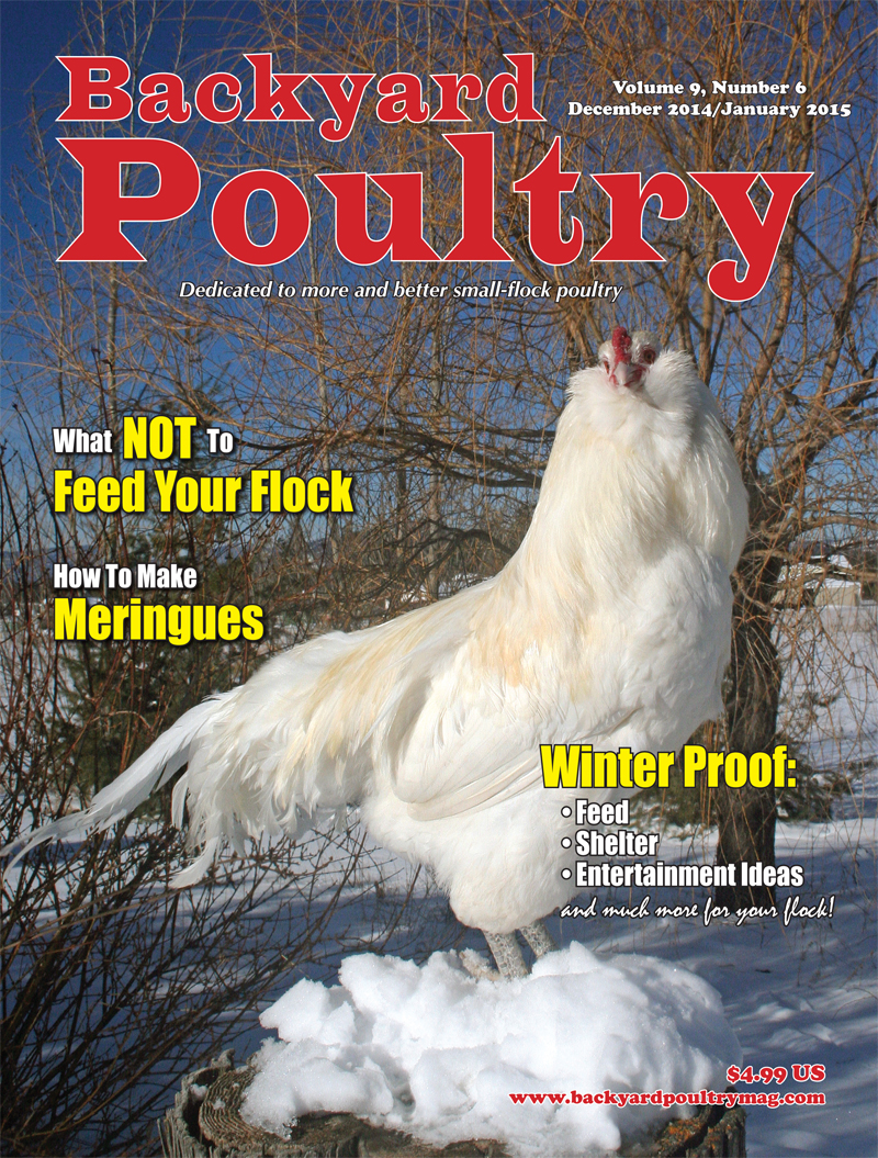 Backyard Poultry December 2014/January 2015