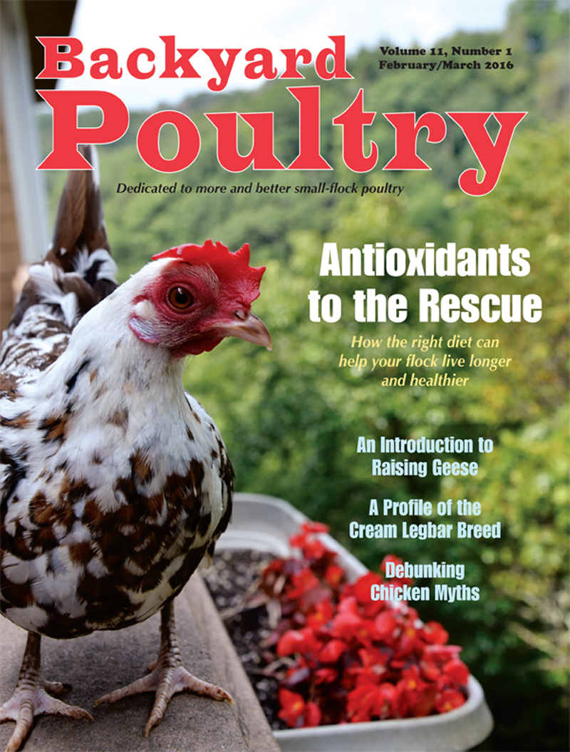 Backyard Poultry February/March 2016