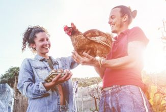 How to Connect with Our Poultry Experts