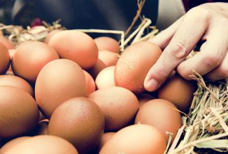 Ask the Expert: Eggs/Odd Eggs