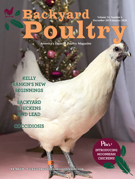 Backyard Poultry December 2019/January 2020