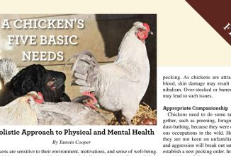 A Chicken's Five Basic Needs