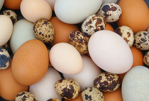 Need an Egg Incubation Timeline? Try This Hatching Calculator