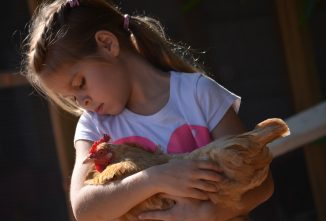 Helping Kids Cope with the Loss of Backyard Hens