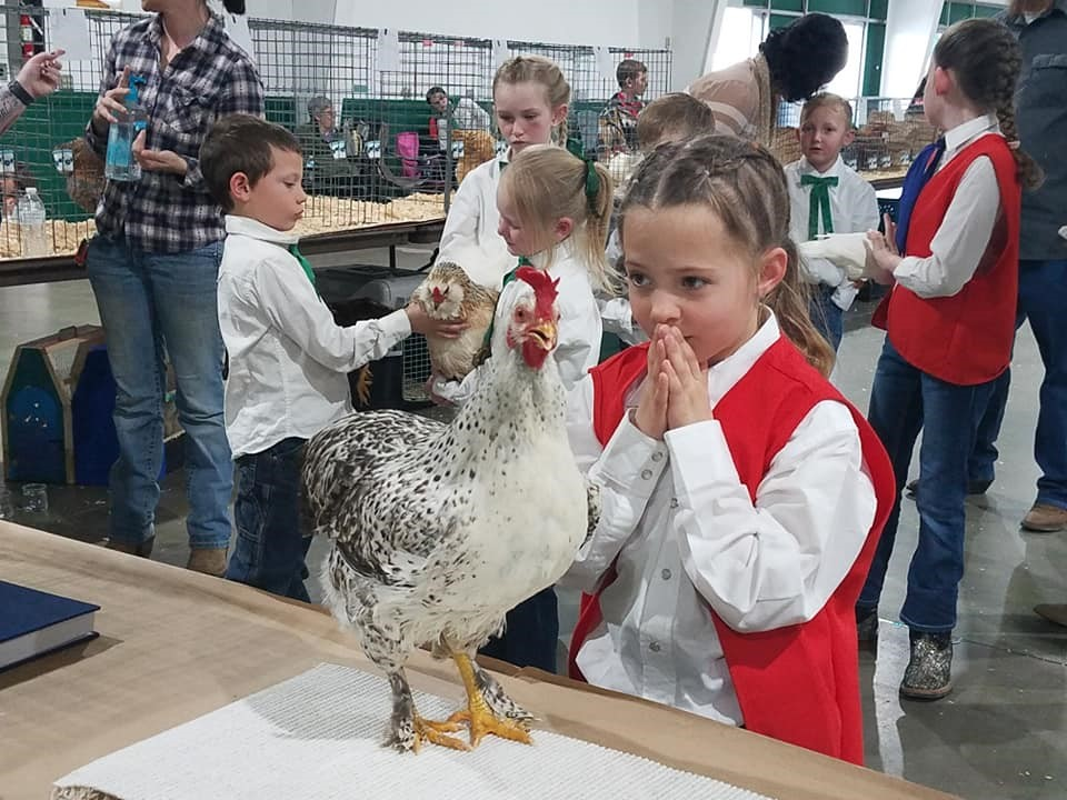 Organizations Lead Young People Toward Poultry
