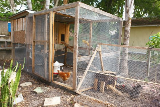 Cheap Cheap Chicken Coops