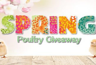 2020 Spring Poultry Giveaway - Enter Each Week!