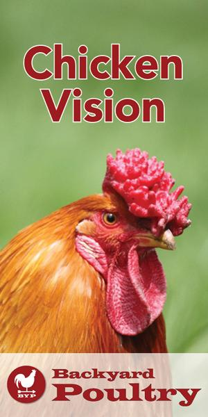 Chickens-full-color-vision