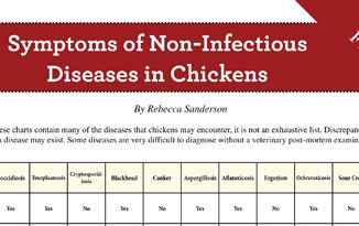 Symptoms of Non-Infectious Diseases in Chickens