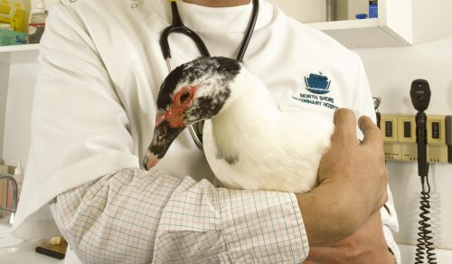 Getting Your Ducks in a Row with Poultry First Aid Kits