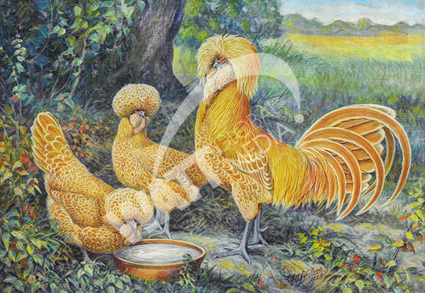 Poultry Art is Historic and Enduring