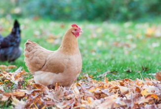 Fall Poultry Giveaway - More Than $1,000 Worth of Prizes!