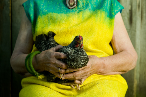 Disabled and Keeping Chickens