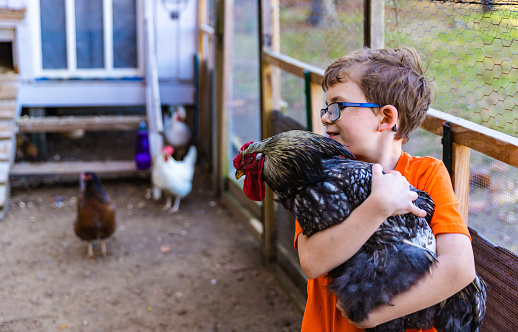 Chicken Diseases That Affect Humans